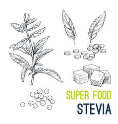 Super food hand drawn sketch vector