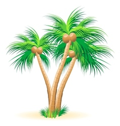 Tropical palm trees vector image