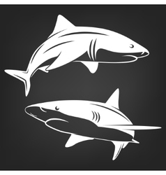Stylized two sharks vector