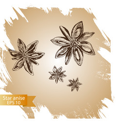 background sketch star anis vector image vector image