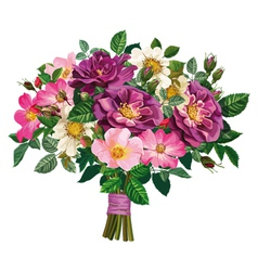 Bouquet of wild rose and of violet roses vector