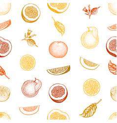 orange seamless pattern hand drawn fruit vector image