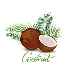 coconut and palm leaves vector image