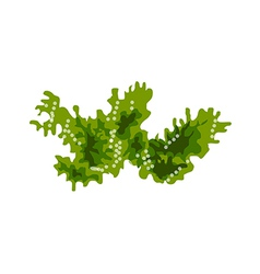 A view of a seaweed vector