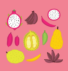 exotic tropical food fruits collection jackfruit vector image