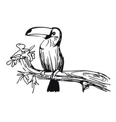 Hand drawn doodle sketch tropical toucan vector