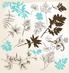 floral set of leafs and branches of plants vector image