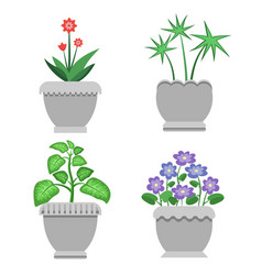 indoor plants and flowers in ceramic pots set vector image