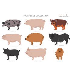 Pig breeds collection 6 farm animals set flat vector