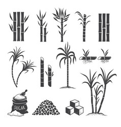 sugarcane farm symbols sweets field plant harvest vector image