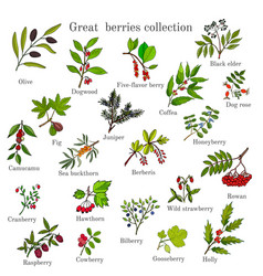 Vintage collection of hand drawn berries plants vector