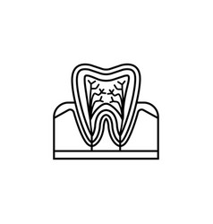 tooth anatomy line icon vector image vector image