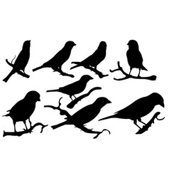 set of sparrows on branches vector image