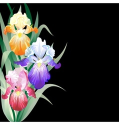Black holidays card with iris flowers vector