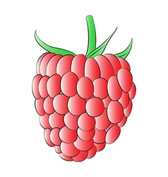 Red Raspberry vector image vector image