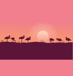 beauty sceney flamingo silhouettes collection vector image