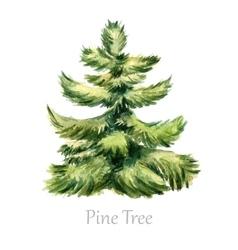 Watercolor christmas tree vector image