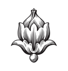 Baroque ornament in victorian style vector
