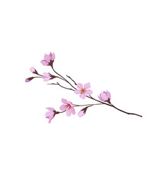 Blooming branch of sakura tree twig with small vector