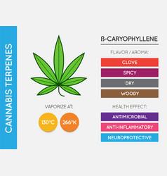 Cannabis terpene information chart aroma vector