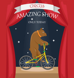 Circus bear on a bicycle flat poster vector