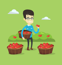Farmer collecting tomatos vector