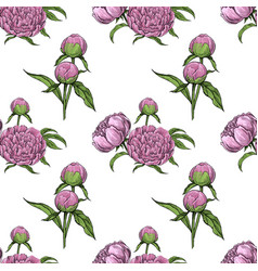 peonies floral seamless pattern vector image