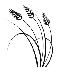 Wheat in wind vector