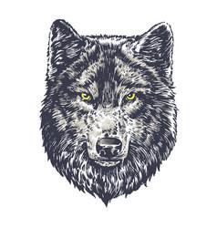 Wolf dark on white background vector
