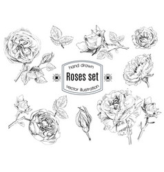 Rose set vector image
