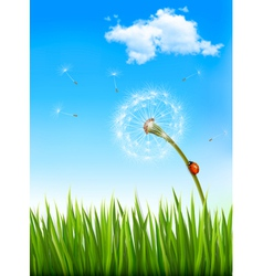 Nature background with a dandelion and a ladybug vector image vector image
