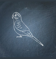 Budgerigar parrot icon sketch on chalkboard vector
