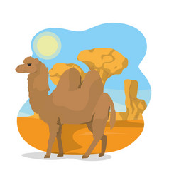 Camel on desert vector