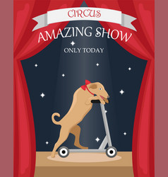 Circus trained dog on a scooter vector