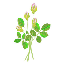 Four rose buds vector