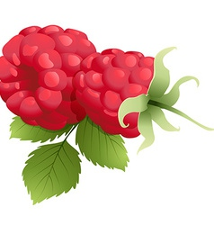 Ripe raspberry with leaf vector image
