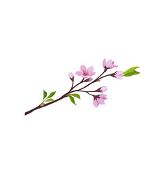 sakura branch with small pink flowers and green vector image