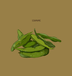 hand drawn vegetable - edamamesoy beans vector image