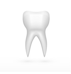 Clear one white molar tooth with shadow vector