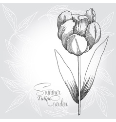 Grey background with tulip vector