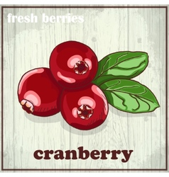 Hand drawing of cranberry Fresh vector