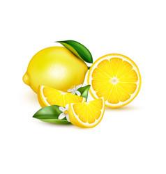 lemon realistic composition vector image