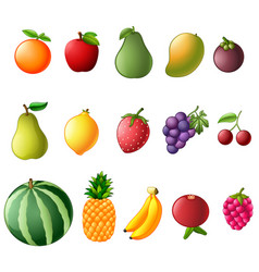 set collection of fresh fruit vector image