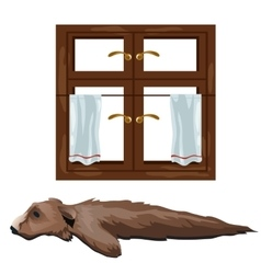 Skin of bear hunting trophy and window vector image