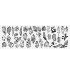Various coniferous cones doodle set vector
