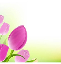 Card Of Pastel Tulips vector image vector image