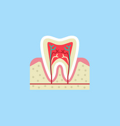 tooth anatomy flat icon vector image vector image