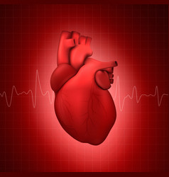 3d realistic glowing health heart model vector image