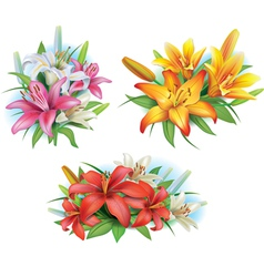 Arrangement from lilies flowers vector