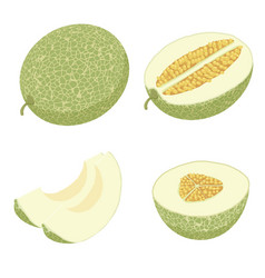 Melon icons set isometric style vector